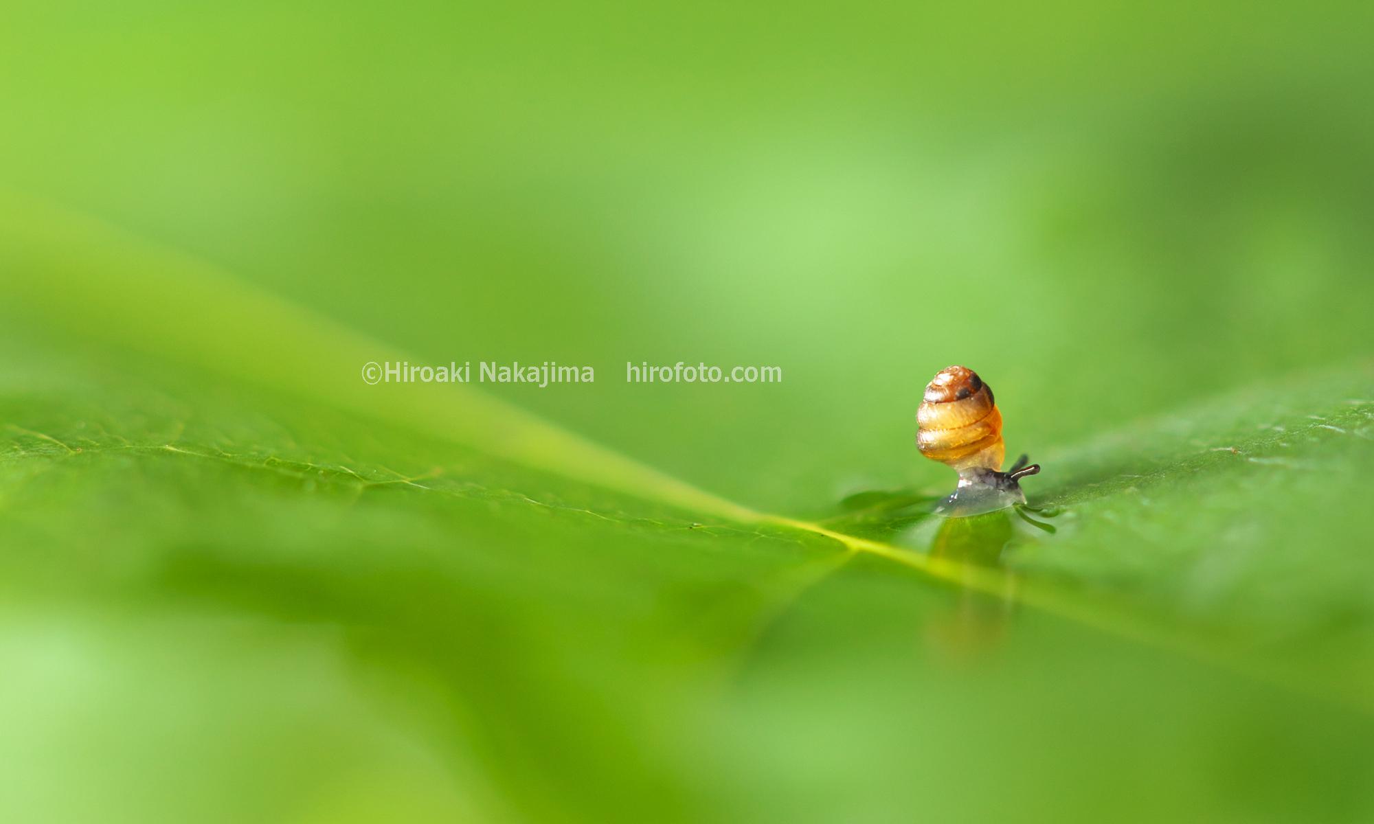 hirofoto.com